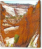 View From Above Capitol Gorge Pioneer Trail In Capitol Reef National Park-utah Acrylic Print