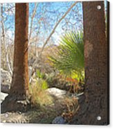 View From Creek Bed In Andreas Canyon In Indian Canyons-ca Acrylic Print