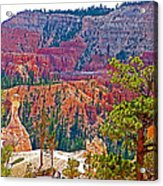 View From Queen's Garden Trail In Bryce Canyon National Park-utah Acrylic Print
