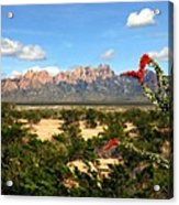 View From Roadrunner Acrylic Print