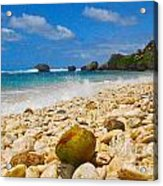 View From The Coconut Acrylic Print