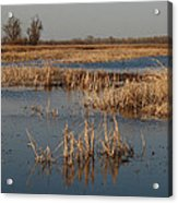 View From The Duck Blind Acrylic Print
