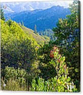 View From Trail To West Point Inn On Mount Tamalpais-california  Acrylic Print