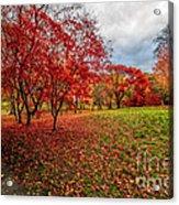 View Of Autumn Acrylic Print