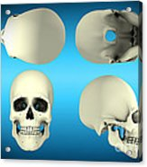 View Of Human Skull From Different Acrylic Print