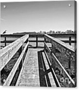 View Of The Elkhorn Slough From A Platform.  Acrylic Print