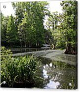 View Over Magnolia Plantation Lake Acrylic Print