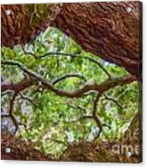 View Through Angel Oak Tree Acrylic Print