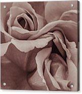 Vignette Rose. Acrylic Print