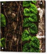 Vine Growing On Tree Acrylic Print by Al Andersen