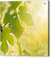 Vine Leaf Acrylic Print