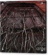 Vine Of Decay 1 Acrylic Print