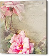 Vine Of Pink Roses Acrylic Print