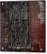 Vines Of Decay Acrylic Print