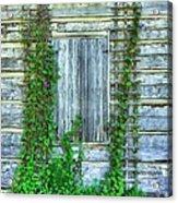 Vines Of Metamora Acrylic Print