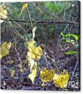Vines On The Fence Acrylic Print