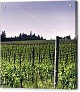 Vineyard 24077 Acrylic Print