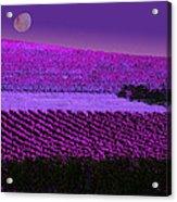 Vineyard 40 Acrylic Print