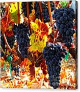 Vineyard 8 Acrylic Print