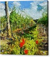Vineyard And Poppies Acrylic Print