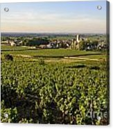 Vineyard And Village Of Pommard. Cote D'or. Route Des Grands Crus. Burgundy.france. Europe Acrylic Print