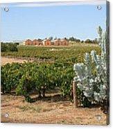 Vineyard And Winery Acrylic Print