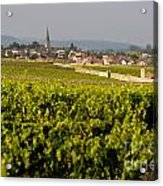 Vineyard In Front Of The Village Of Meursault. Burgundy Wine Road. Cote D'or.burgundy. France. Europ Acrylic Print