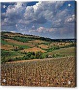 Vineyard In Frushka Gora. Serbia Acrylic Print