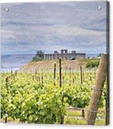 Vineyard In Maryhill Washington State Acrylic Print