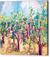 Vineyard In The Afternoon Sun Acrylic Print