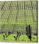 Vineyard Lines 23036 Acrylic Print