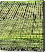 Vineyard Lines 23048 Acrylic Print