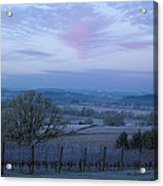 Vineyard Morning Light Acrylic Print by Jean Noren