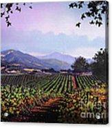 Vineyard Napa Sonoma Acrylic Print by Robert Foster