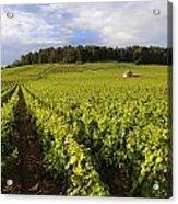 Vineyard Near Monthelie. Burgundy. France. Europe Acrylic Print