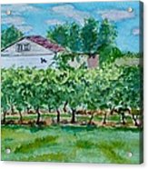 Vineyard Of Ontario 2 Acrylic Print
