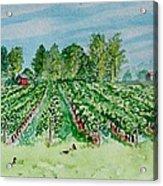 Vineyard Of Ontario Canada 1 Acrylic Print