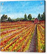 Vineyard On Dry Creek Road Acrylic Print