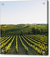 Vineyard Patchwork Acrylic Print by Clint Brewer