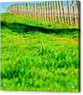 Vineyard Path 22628 Acrylic Print