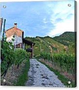 Vineyard Path Acrylic Print by Sarah Christian