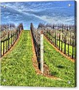 Vineyard Bodega Bay Acrylic Print