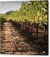 Vineyard Soil Of Sonoma Acrylic Print