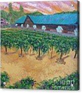Vineyard Sunset Acrylic Print