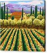 Vineyard With Olives Tuscany Acrylic Print