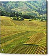 Vineyards Below Zellenberg France 1 Acrylic Print