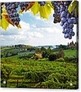 Vineyards In San Gimignano Italy Acrylic Print