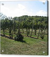 Vineyards In Va - 121251 Acrylic Print by DC Photographer