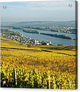 Vineyards Near A Town, Rudesheim Acrylic Print