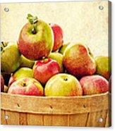 Vintage Apple Basket Acrylic Print